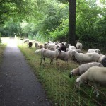 schapen website